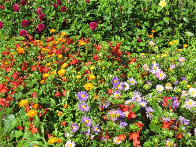 Blomsterbed fra parken